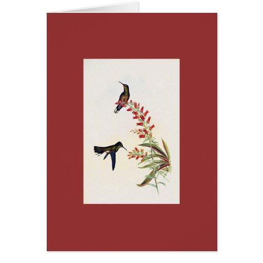 Gould - colibrí de Sabrewing de Owen Tarjeta De Felicitación