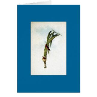 Gould - colibrí del ermitaño del Pigmy Tarjeta De Felicitación