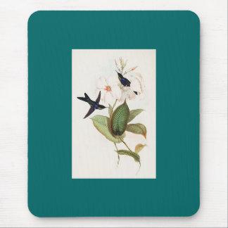 Gould - colibrí refulgente de la Madera-Ninfa Tapetes De Raton