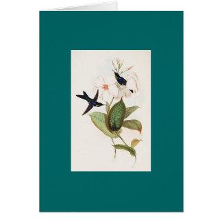 Gould - colibrí refulgente de la Madera-Ninfa Tarjeta De Felicitación