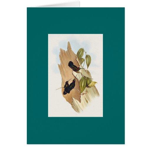 Gould - colibrí Verde-Afrontado de Lanza-Bill Tarjetas