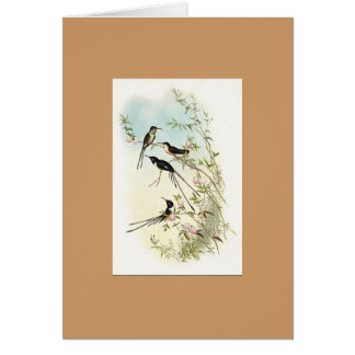 Gould - Cora's Shear-Tail Hummingbird Greeting Card