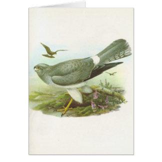 Gould - corredor de cross de gallina - cyaneus del tarjeta de felicitación