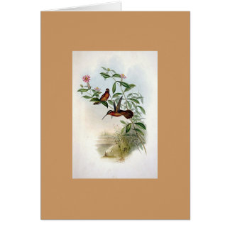 Gould - Dohrn s Hermit Hummingbird Greeting Cards