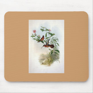 Gould - Dohrn s Hermit Hummingbird Mouse Pad