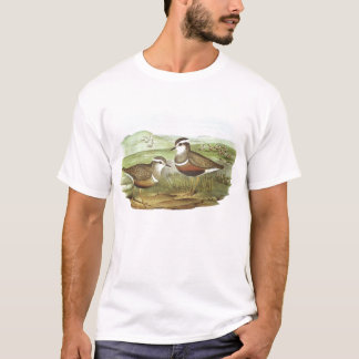 Gould - Dotterel - Charadrius morinellus T-Shirt