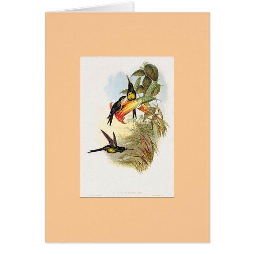 Gould - Empress HummingBird Greeting Card