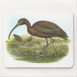 Gould - Glossy Ibis - Plegadis falcinellus Mouse Pads