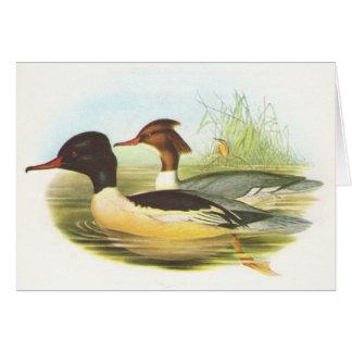 Gould - Goosander - Mergus merganser Card