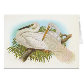 Gould - Great White Heron - Egretta alba Card