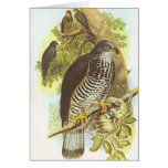 Gould - halcón de miel - apivorus del Pernis Tarjetón
