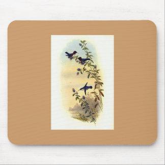 Gould - Helena's Calpte Hummingbird Mouse Pad