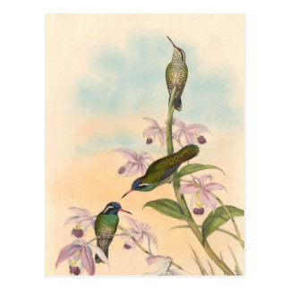 Gould Hummingbirds and Orchids Postcard