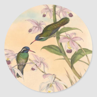 Gould Hummingbirds and Orchids Classic Round Sticker