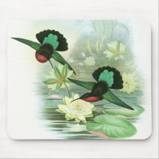 Gould Hummingbirds Waterlilies Mousepad Mouse Pad