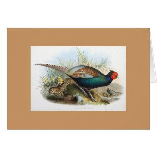 Gould - Japanese Pheasant Card