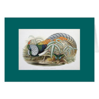 Gould - Lady Amherst's Pheasant Greeting Card