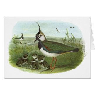 Gould - Lapwing - Vanellus vanellus Greeting Card
