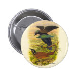 Gould - Lesser Superb Bird Of Paradise Promo Button