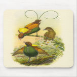 Gould - Magnificent Bird Of Paradise Mouse Pad