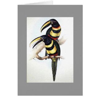 Gould - Many-Banded Aracari Toucan Card