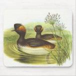 Gould - nigricollis Negro-Necked del Podiceps del  Tapetes De Ratón