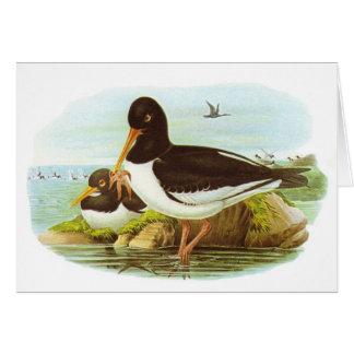Gould - Oystercatcher - Haematopus ostralegus Card