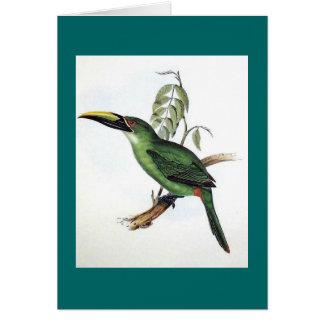 Gould - Peacock Groove-Bill Aracari Toucan Card