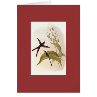 Gould - Purple-Tailed Comet Hummingbird Cards