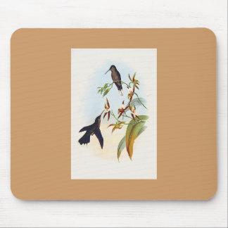 Gould - ratón Amplio-Provisto del colibrí de Sabre Tapete De Ratones