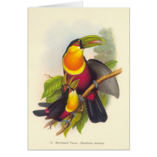 Gould - Red-Breasted Toucan Card