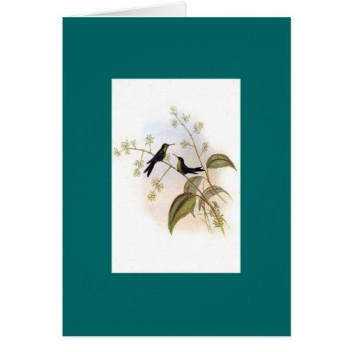 Gould - Riccord's HummingBird Card