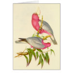 Gould - Rose-Breasted Cockatoo Card