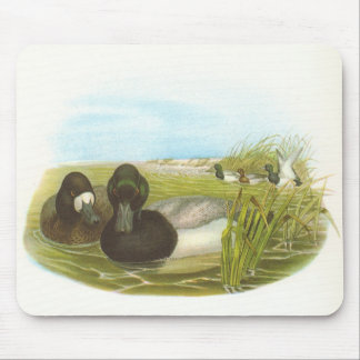 Gould - Scaup - Aythya marila Mouse Pad