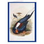 Gould - Swinhow's Fireback Pheasant Cards