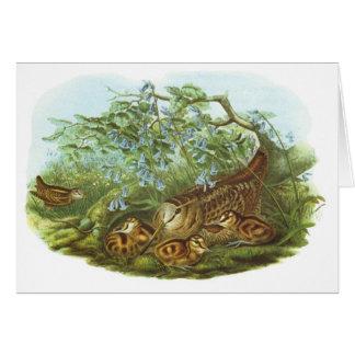 Gould - Woodcock - Scolopax rusticola Card