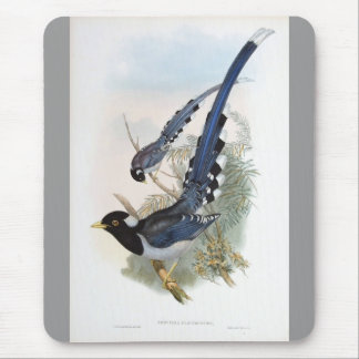 Gould - Yellow-Billed Blue Magpie Mouse Pad