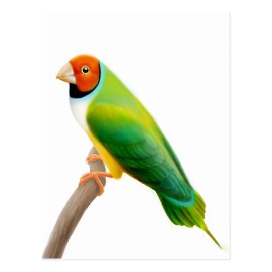 Gouldian Finch Orange Headed Postcard