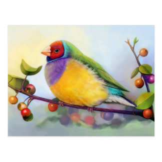 Gouldian finch realistic painting postcard