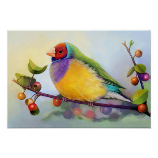 Gouldian finch realistic painting poster