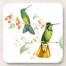 Goulds' Hummingbirds Coaster