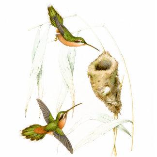 Goulds' Hummingbirds Ornament