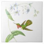Goulds' Hummingbirds Tile