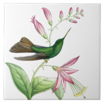 Goulds' Hummingbirds Tile