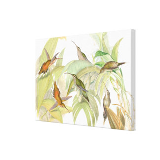 Goulds Hummingbirds Wrapped Canvas Print