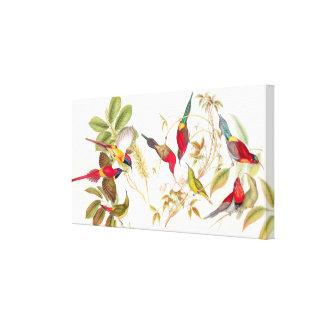 Goulds Sunbird Birds Wrapped Canvas Print