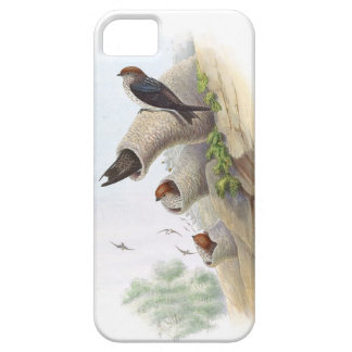 Goulds Swallow Birds iPhone 5 Case