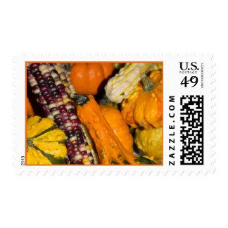 Gourds & Corn Assortment Photo v2 Postage