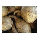 Gourds I Photo Print