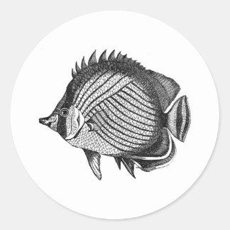 Grabado antiguo de los pescados de la historia nat etiquetas